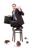 Terrified businessman standing on chair in the middle of rat inv. Terrified young businessman standing on chair in the middle of rat invasion isolated on white Stock Photography