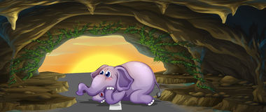 A terrified elephant in the middle of the road Stock Photos