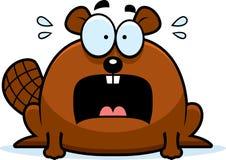 Terrified Little Beaver Stock Image