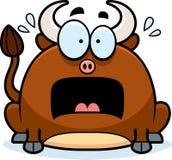 Terrified Little Bull Stock Photo