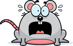 Terrified Little Mouse Royalty Free Stock Images