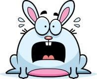 Terrified Little Rabbit Stock Images
