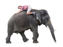 Terrified tourist lying on a walking elephant Stock Photo