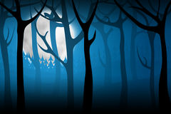 Terrify night forest Stock Photos