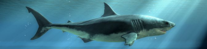 Great White In the Sunlight. The terrifying profile of a great white shark swims past in the depths of the deep blue sea. Sunlight breaks the surface of the vector illustration
