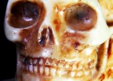 Terrifying skull with eye orbits. Terrifying skull with teeth and eye orbits Royalty Free Stock Photos