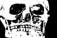 Terrifying skull with teeth and eye orbits Royalty Free Stock Image