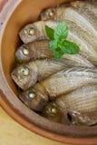 Terrine ryba Zdjęcie Stock