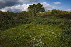Território interno de Sardinia fotografia de stock