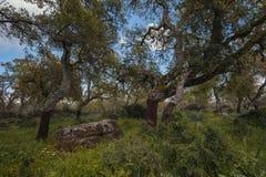Territ?rio interno de Sardinia imagens de stock royalty free