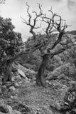 Territ?rio interno de Sardinia imagem de stock royalty free