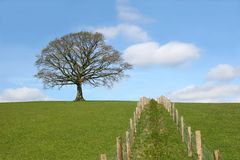 Territorial Divisions. Oak tree on a horizon in early spring with a double wooden post and wire fence line dividing a field in the foreground. Set against a blue Stock Photo