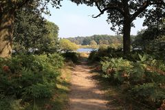Path in Richmond Park, London. This is the territory of Richmond Park, a landscape park located in the south-west of London stock image