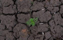 Terrones de la tierra seca con la opinión superior cada vez mayor del germen fotografía de archivo