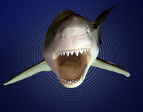Terror. The terror of an approaching Great White Shark, displaying peoples fears Royalty Free Stock Image