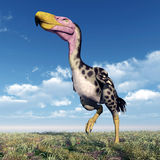 Terror Bird Kelenken Royalty Free Stock Image