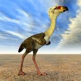 Terror Bird Phorusrhacos Stock Image