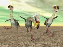 Terror Bird Phorusrhacos. Computer generated 3D illustration with the Terror Bird Phorusrhacos Stock Photography