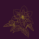 Terry flower clematis sketch. Stock Photos