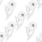 Terry poppy. Floral seamless texture. Royalty Free Stock Photography