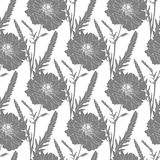 Terry poppy. Floral seamless texture. Stock Image