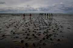 A group of tourists walks along the seabed at low tide from Holland to the island leaving footprints in the mud royalty free stock photos