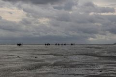 A group of tourists walks on the seabed at low tide from Holland to the island in bad weather and rain royalty free stock images