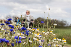 TERSCHELLING, NETHERLANDS, June 20, 2015: Tourists cycling through a sea of colorful flowers Royalty Free Stock Image