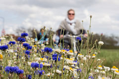 TERSCHELLING, NETHERLANDS, June 20, 2015: Tourists cycling through a sea ofd colorful flowers stock photos