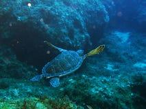 海Tertles 免版税图库摄影