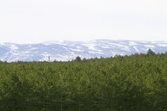 Teruel province snow mountain pine forest Royalty Free Stock Photography