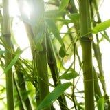 Het bosje van het bamboe Royalty-vrije Stock Fotografie