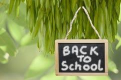 Terug naar school bij het zwarte schoolbord hangen van een boom wordt geschreven die Royalty-vrije Stock Afbeeldingen