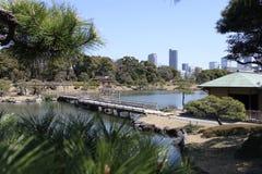 Terum i den Hamarikyu trädgården - Tokyo Arkivfoto