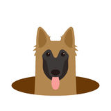 Tervuren dog on the hole,watching, vector illustration. Tervuren dog on the hole,watching  vector illustration Royalty Free Stock Images