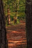 Terwijl het lopen door het bos van Slovenië 5 stock foto