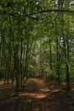 Terwijl het lopen door het bos van Slovenië 6 royalty-vrije stock fotografie