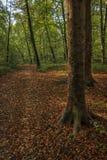 Terwijl het lopen door het bos van Slovenië 7 stock foto's