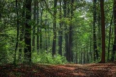 Terwijl het lopen door het bos van Slovenië 8 stock foto's