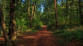 Terwijl het lopen door het bos van Slovenië 9 stock foto's