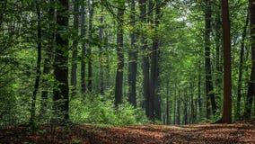 Terwijl het lopen door het bos van Slovenië 10 royalty-vrije stock afbeeldingen