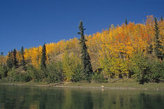 Teslin River Valley Stock Photography