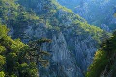 Tesnei Gorge Royalty Free Stock Photos