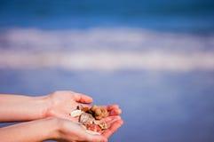 Tesoros de la playa Fotos de archivo libres de regalías