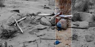 Tesoros del mar Fotos de archivo