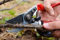 Tesoura de podar manual do jardim à disposição, close up imagem de stock royalty free