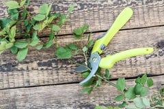 A tesoura de podar manual e o ramo cortado de aumentaram na placa de madeira foto de stock royalty free
