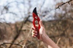 Tesoura de podar manual vermelha nas mãos de uma menina fotografia de stock