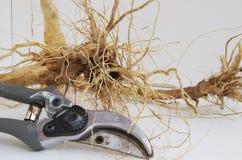 Tesouras de jardim da mão Fotografia de Stock