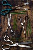 Tesouras e ervas Imagens de Stock